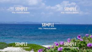 【久高島】花と海 写真素材