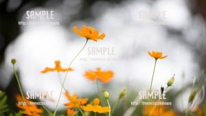 【中城】鮮やかな花 写真素材