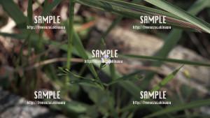 sample_72