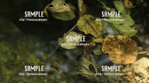 sample_75