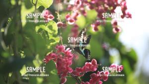 sample_76