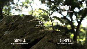 sample_78