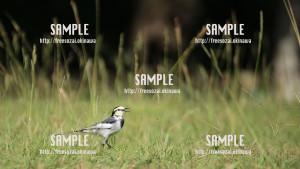 sample_84