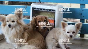 【わんこ】暖房の取り合いする犬 写真素材