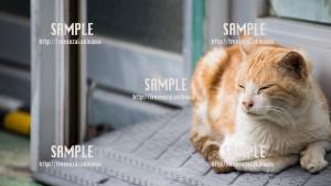 【長田】ウトウトする猫 写真素材