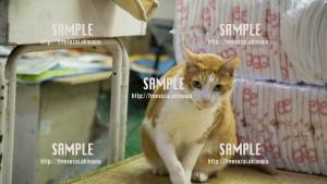 【平和通り】看板猫 写真素材