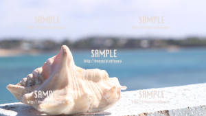 【宮城島】貝と海 写真素材
