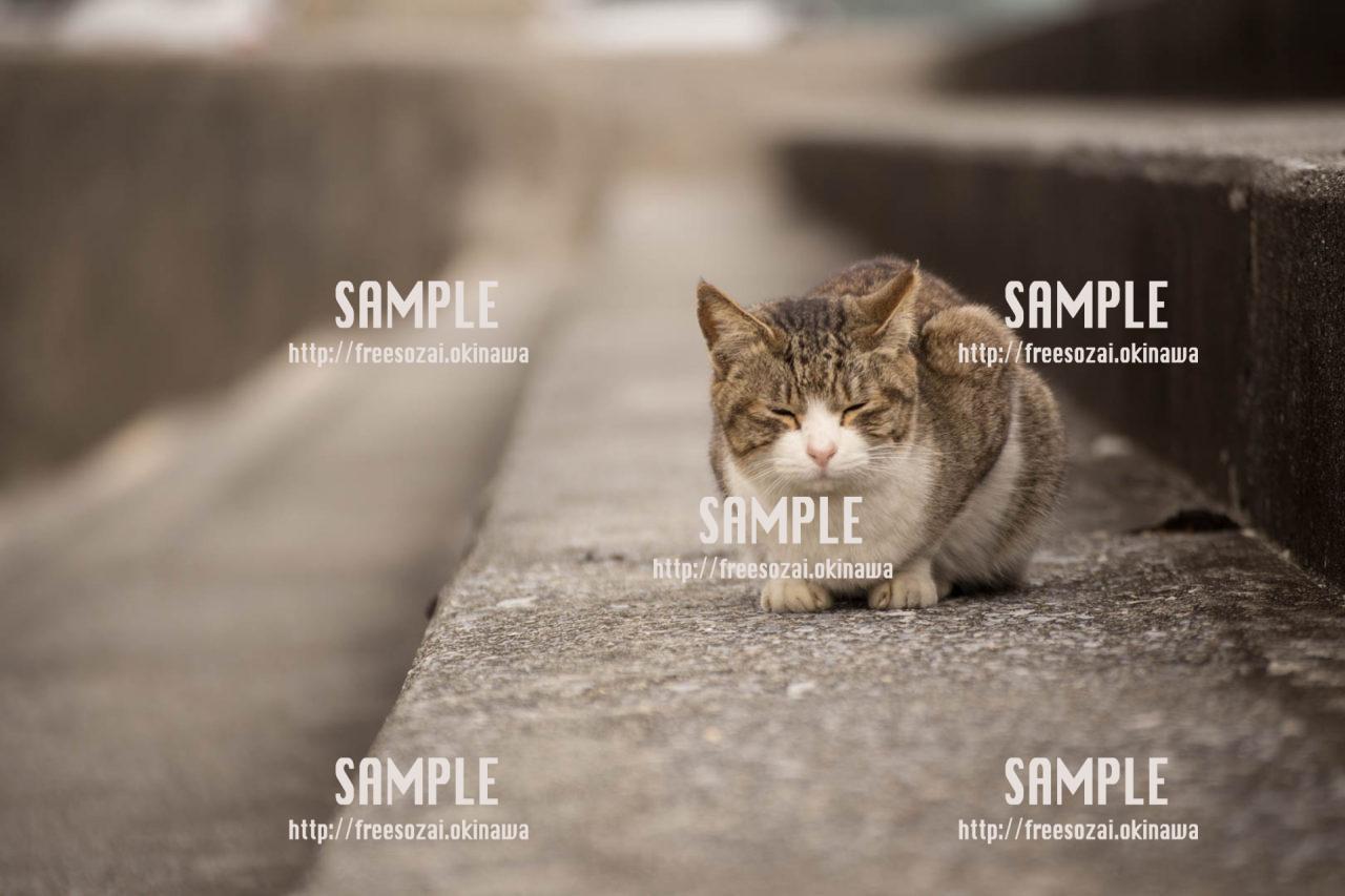 目をつむる猫の写真素材