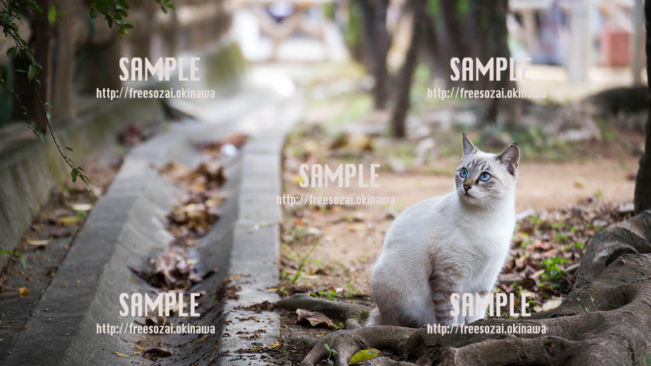 【長田】公園で休憩する猫 写真素材
