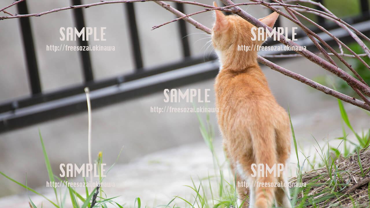 【与儀公園】背伸びする子猫 写真素材