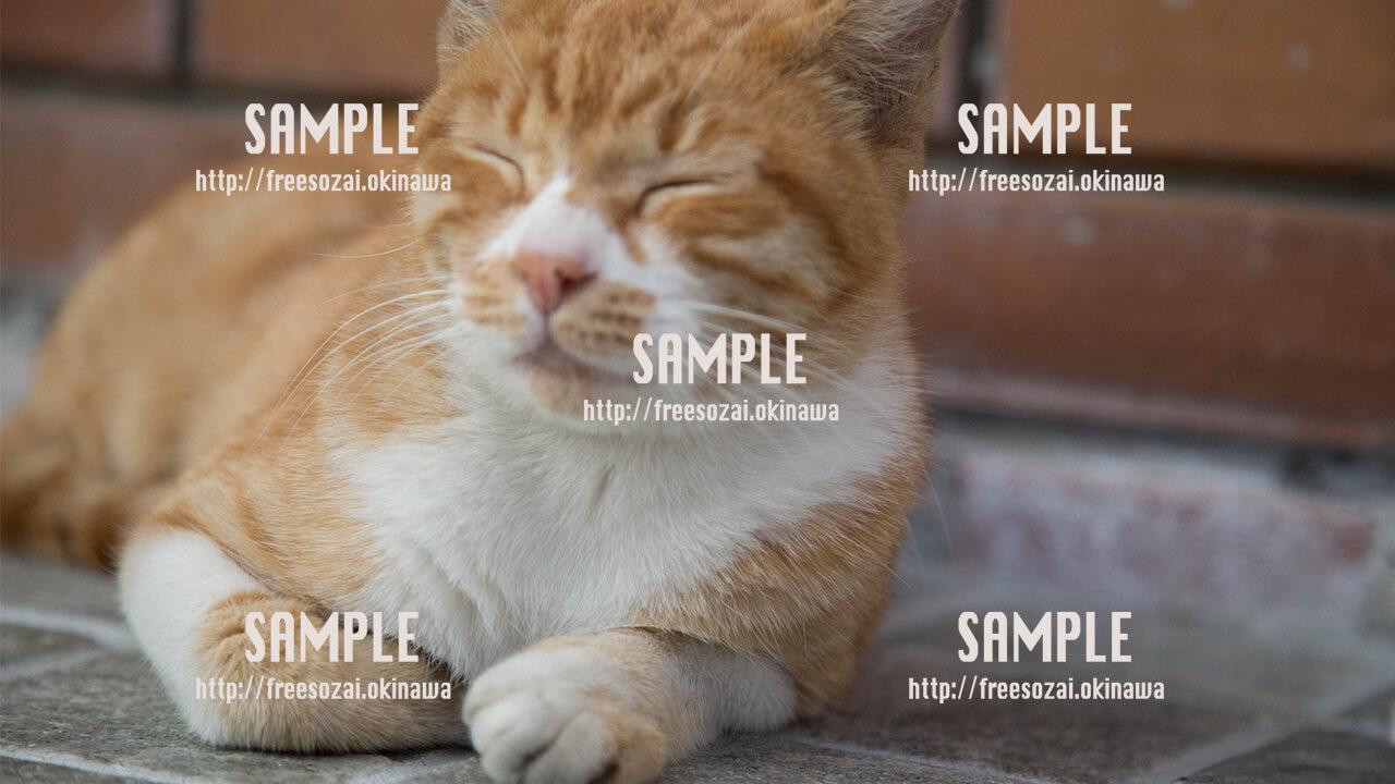 【国際通り】うとうと猫さん 写真素材