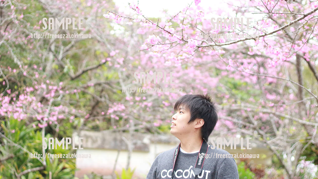 【名護城公園】桜祭り 写真素材