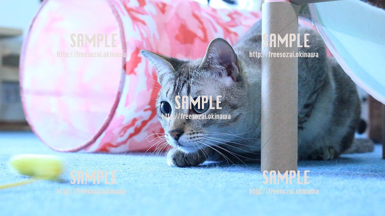 【猫】トンネルをくぐる猫 写真素材