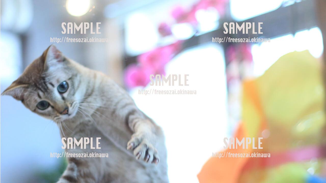 【猫】ねこパンチ 写真素材