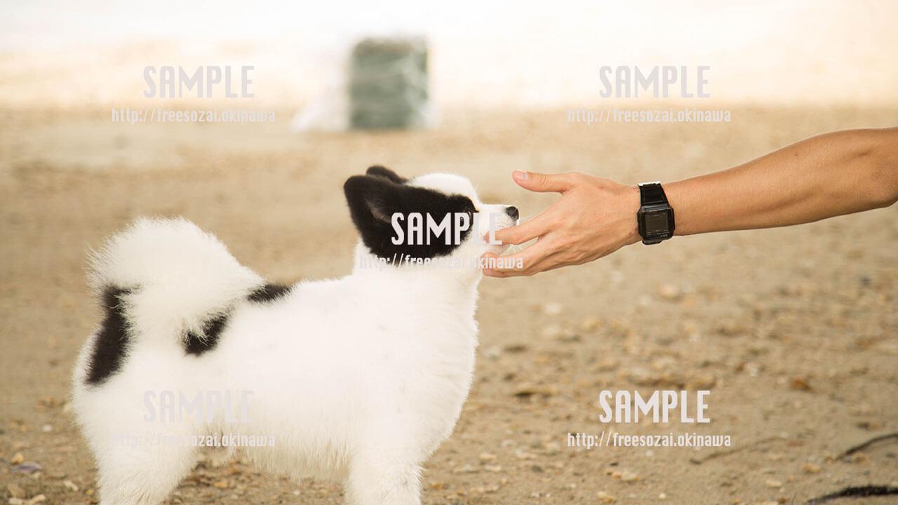 【犬】人間と触れ合う犬 写真素材