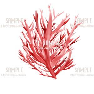 サンゴのイラスト素材