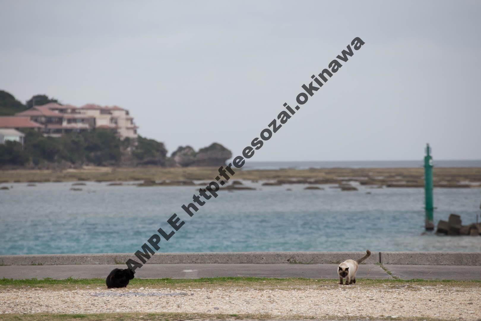 猫と海 写真素材