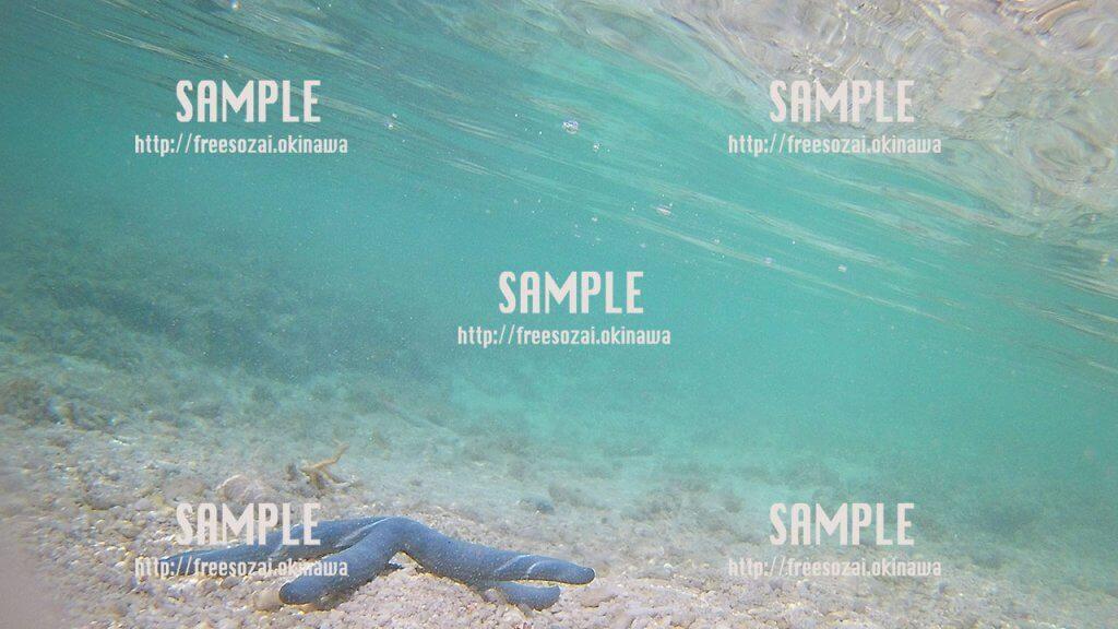 青いヒトデ 写真素材