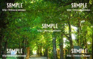【沖縄】沖縄の森林 写真素材