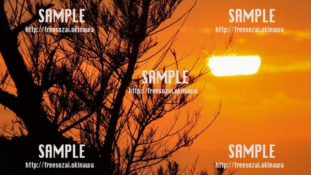 【沖縄】夕日と木のシルエット 写真素材