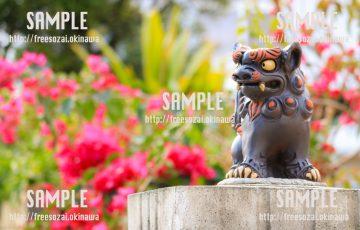 【沖縄】ブーゲンビリアの花とシーサー 無料写真素材