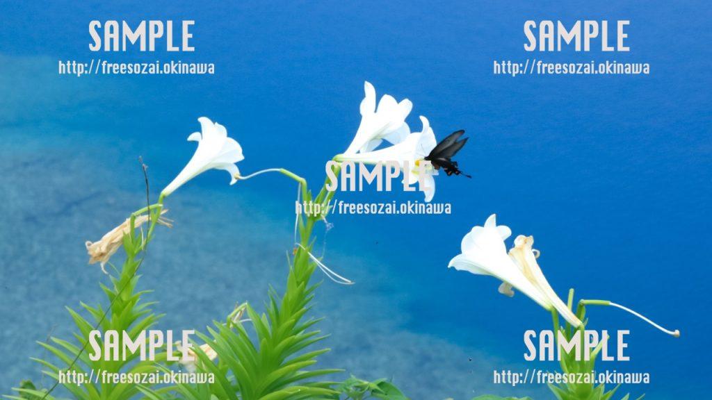 ユリの花と蝶 写真素材